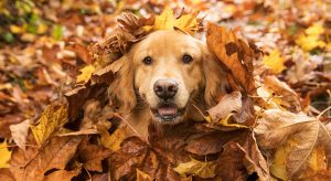 Pets In Fall Real Estate