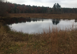 Duxbury Massachusetts is a wet area with lots of bogs and swamps. Crowell conservation area has a great view at this location.