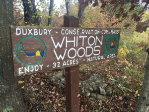 Whiton Woods is a Duxbury Conservation area taking up 32 acres of Naturall Area